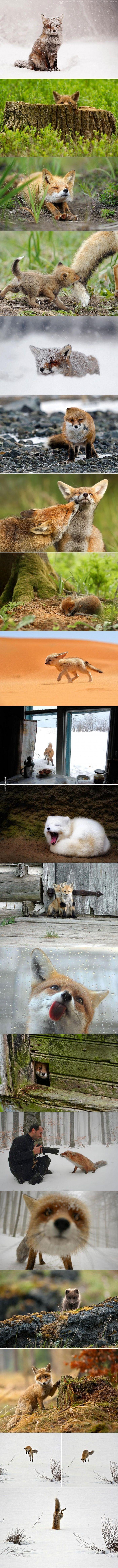Nemkutya.com - 20 édes fotó rókákról - Vuk és társai a valóságban