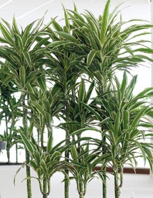 Πανέμορφα καλλωπιστικά φυτά: Καλλωπιστικά Φυτά, Πανέμορφα Καλλωπιστικά