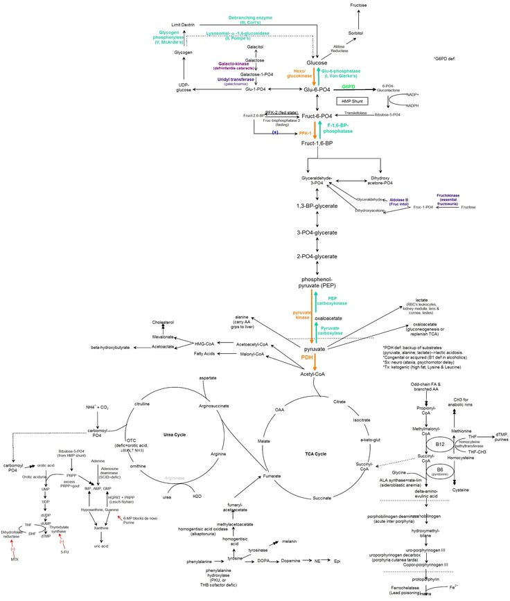 Do you need to take Biochemistry to get into Medical School?