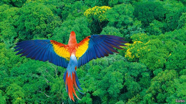 Floresta Amazônica,Brasil