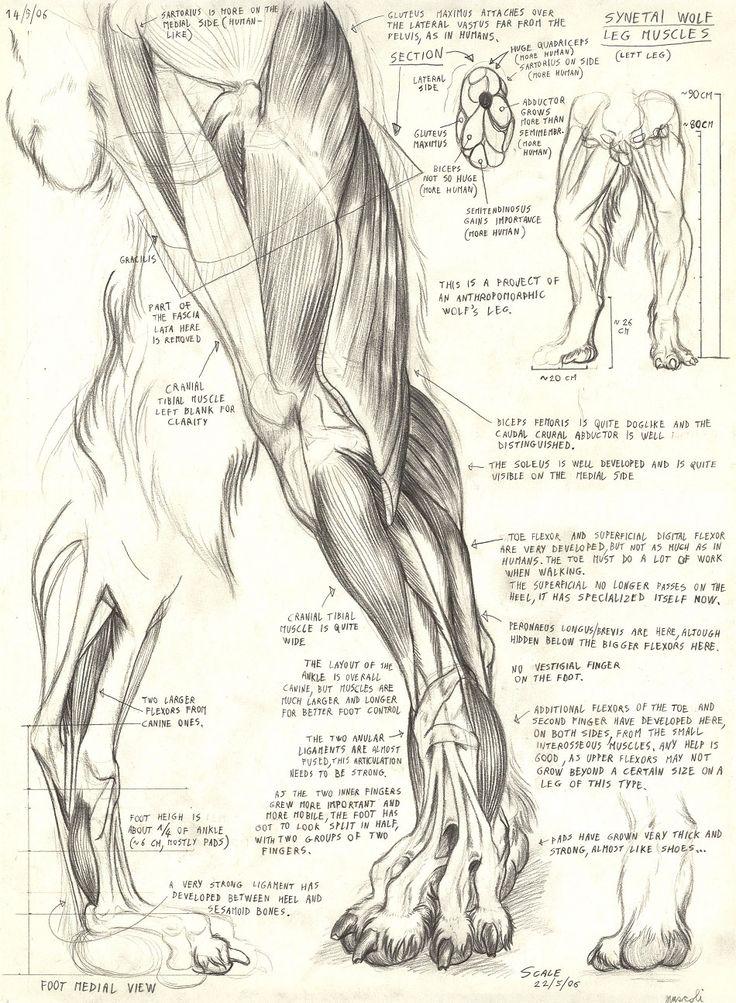 Synetai wolf leg by Alessio-Scalerandi.deviantart.com on @deviantART