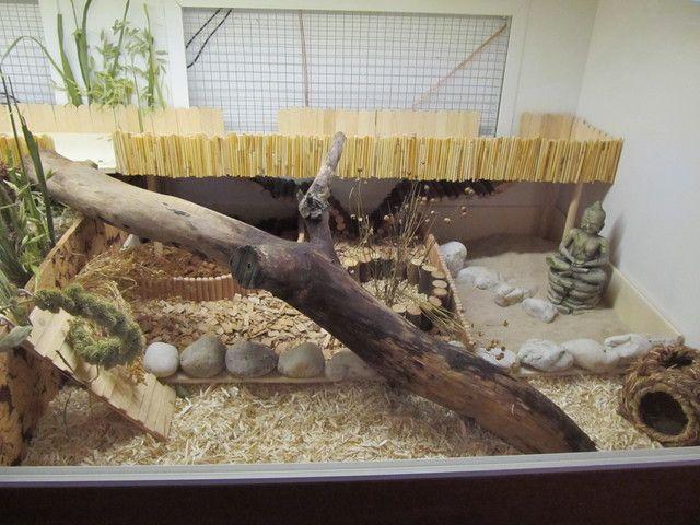 """Userin Lemming aus dem Hamsterforum wohnt schöner - und ihre Hamster ebenfalls. 1: Gehegewand im Wohnzimmer / """"cage wall"""" in living room..."""