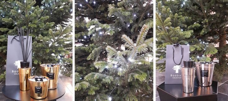 baobab geurkaarsen kerst cadeau