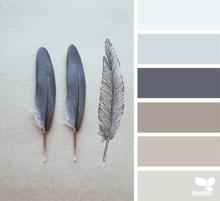 { feathered tones } image via: @julie_audet