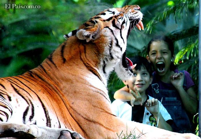 El Zoológico de #Cali cuenta con más de 250 especies de animales. Suricatas y lémures entre los más llamativos. #Colombia