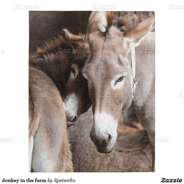 donkey in the farm puzzle