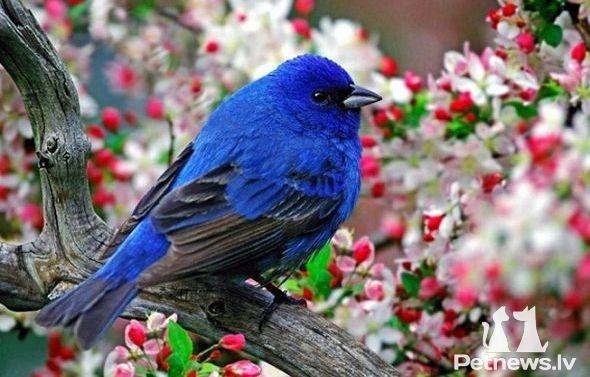 Яркие пятна неба - разноцветные птицы