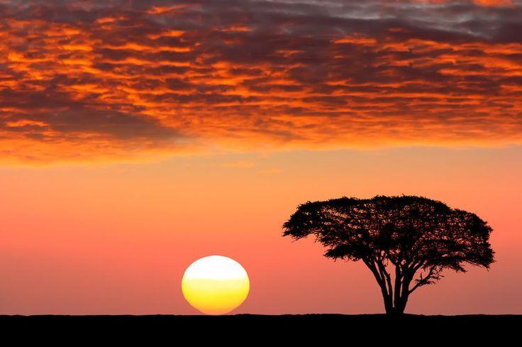 Le parc national du Serengeti en Tanzanie