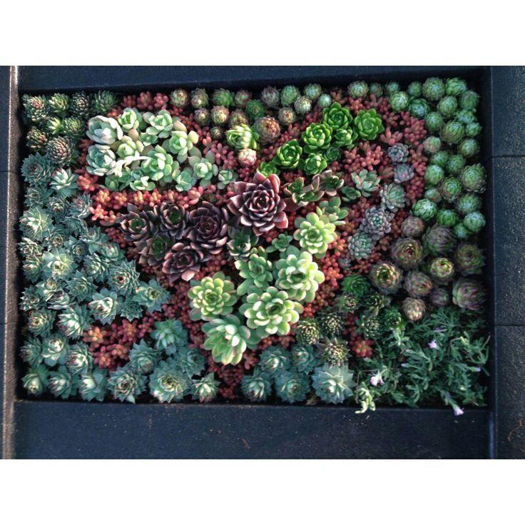 Cuadro de suculentas jardines verticales pinterest - Cuadro jardin vertical ...