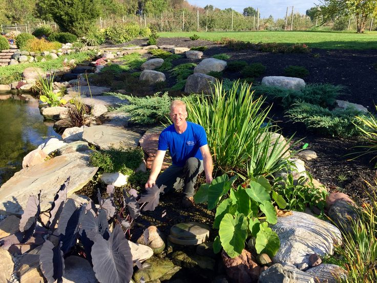 7 best images about fall pond maintenance cleaning for Winter pond plants