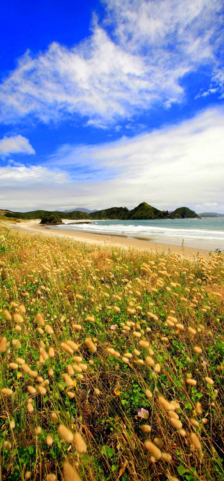 Medlands Beach - Great Barrier Island, NZ