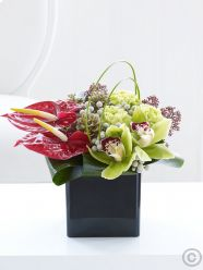 Christmas Orchid and Anthurium Cube