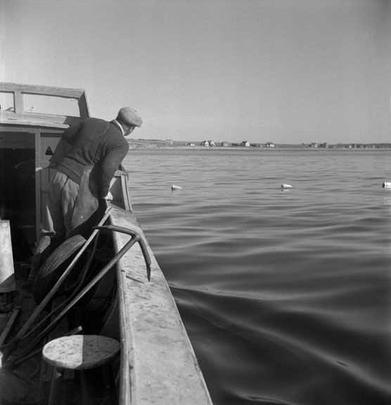 Gathering herring; looking out to sea #water #fish #boat #character #landscape #scene #fishing