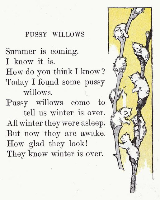 """Pussy willows 
