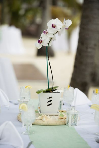 Unique Wedding Centerpiece But All White Orchids Just Pot Maybe Red And