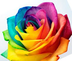 Image result for transgender symbol roses