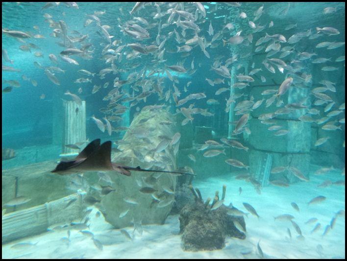 akvaryum balıklar su dünyası deniz canlıları nata vega ...