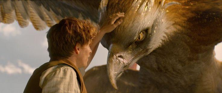 """Nachricht: """"Harry Potter""""-Spin-off """"Phantastische Tierwesen"""": Ein neuer Zauber - http://ift.tt/2flhIKN #news"""