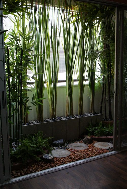 Potted bamboo for privacy- cement cinder blocks