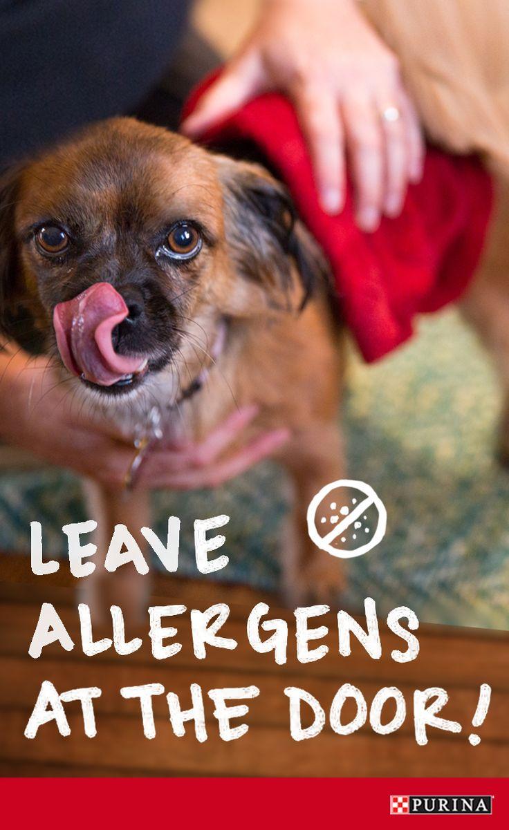 25 best summer dog ideas images on pinterest your dog dog cat