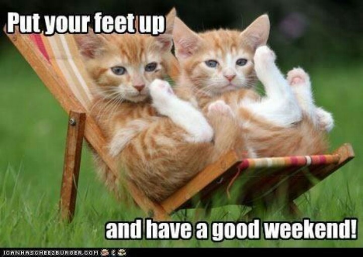 Image result for happy friday cat memes