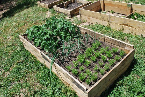 simple DIY pallet raised garden beds