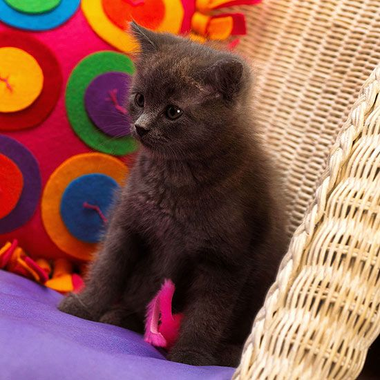 If you have a grey cat we have some name ideas for you! These adorable name ideas are perfect for grey cats and kittens. Get inspired to name your cat one of these trendy cat names.