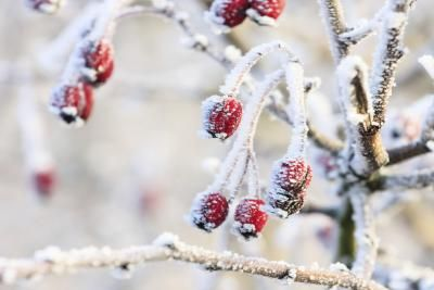 C mo hacer nieve casera para decorar el rbol de navidad - Arbol navidad nieve ...