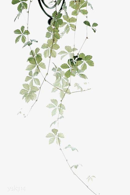 Die Blätter der Pflanzen Frei PNG und Clipart