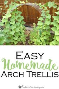 Growing vegetables on an arch trellis saves you invaluable space in the garden, and makes harvesting a breeze. Here is how I created my arch trellis design.
