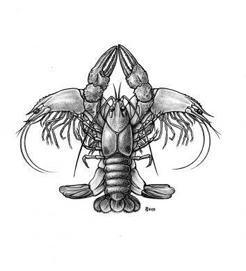 Crawfish and Shrimps in a familiar fleur-de-lis pose.  That's so Louisiana!