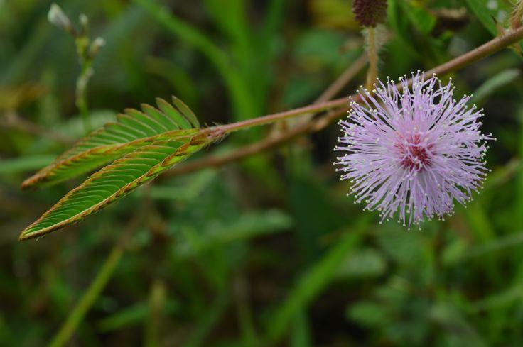 Bunga yang indah di suatu bukit di daerah Wonogiri :)