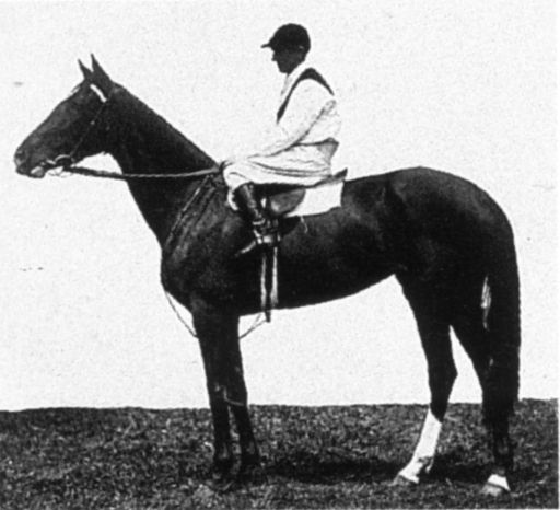SISTER OLIVE (Aus) Ch f 1918, Red Dennis (GB) - Jubilee Queen. From a half-sister to champion racehorse and aire, Comedy King. Winner of one race, her first start, the Maribyrnong Trial Stakes, prior to the 1921 Melbourne Cup, she managed to survive a chequered run to win the race as a 3yo. Her other claim to fame is as a maternal great-great grand-dam of the champion Tobin Bronze.