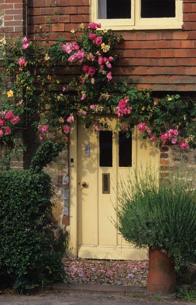 Park Terrace, Sussex. Front garden of cottage with roses round the door