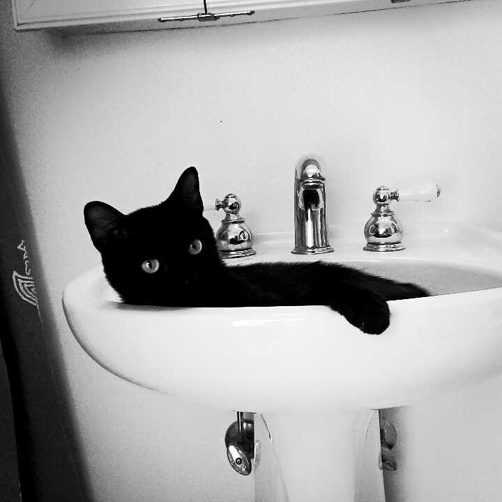 Stylowe czarne koty na piątek 13-go, fot. pinterest