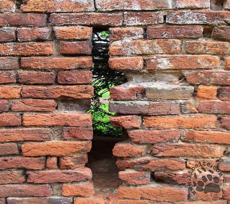 """Una lettura indimenticabile, un filmato da non perdere (lo ho postato in passato ma se qualcuno non lo conosce lo riposto volentieri). Parole giuste, parole piene di speranza.  """"Ogni ostacolo, ogni muro di mattoni, è lì per un motivo preciso. Non è lì per escluderci da qualcosa, ma per offrirci la possibilità di dimostrare in che misura ci teniamo.[...] #randypausch, #ultimalezione, #ostacolo, #muro, #italiano,"""