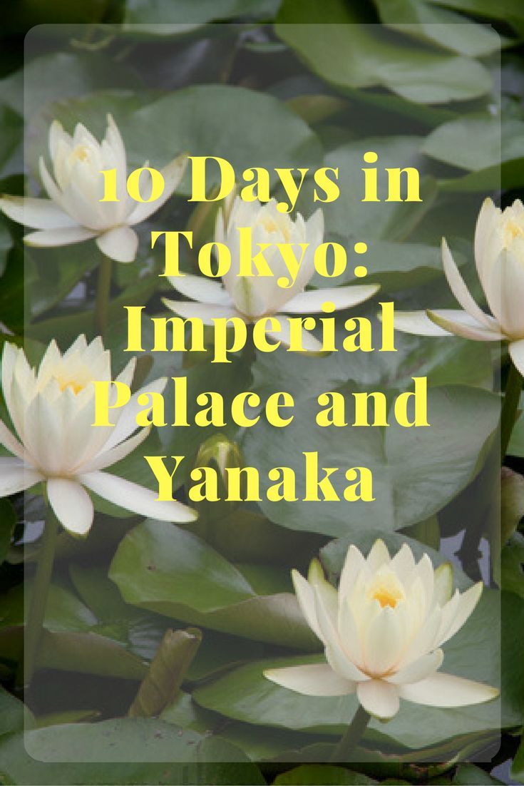 10 Days in Tokyo: Imperial Palace and Yanaka - See photos of the gorgeous Imperial Palace Gardens!