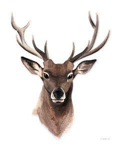 Aquarell Illustration Hirsch, Watercolor Deer / Stag