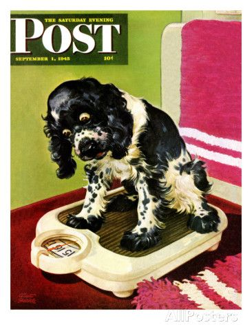 """Butch Weighs In,"" Saturday Evening Post Cover, September 1, 1945 Impressão giclée por Albert Staehle na AllPosters.com.br"