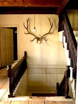 93 best Roe Deer Antlers- love images on Pinterest | Antlers, Homes ...