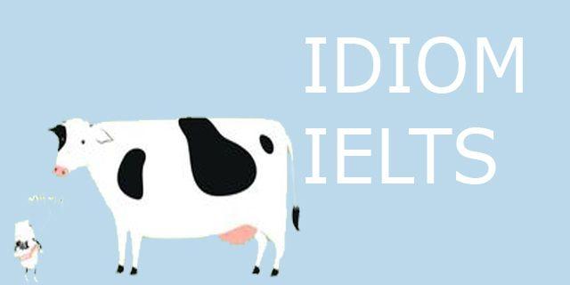 Idiom bahasa inggris untuk meningkatkan skor IELTS