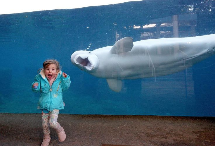 A young girl reacts as she is greeted by Juno, a fifteen-year-old male beluga whale, at the viewing window at Mystic Aquarium earlier this week. Juno is one of two beluga whales at the aquarium in Mystic, Connecticut. This is one of our Photos of the Week, curated by Alan Taylor at theatlantic.com/photo. Visit our site to see more of this week's best photos -- from tax bill protests in Washington D.C. and Pope Francis's visit to Myanmar, to athletes racing an ultramarathon through a…