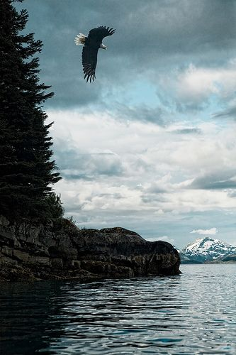 Prince William Sound, Alaska... one of my favorite trips was kayaking the sound for 1 week, gorgeous