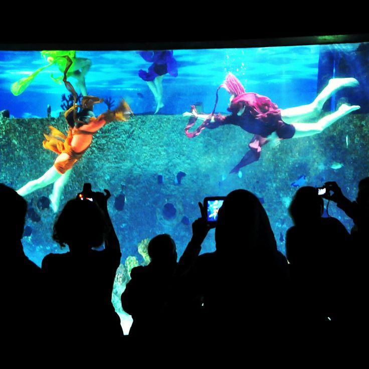 "Turkuazoo host an underwater show ""Dance of the Ocean"" for the midterm holiday @Turkuazoo Akvaryum Aquarium"