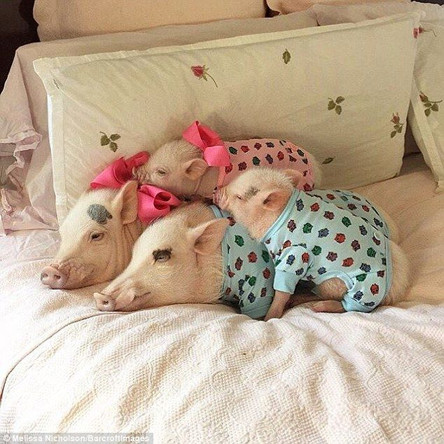 Their owner captures them in all sorts of poses - including sleeping on her bed