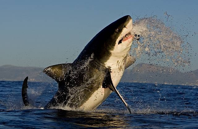 Fantastic photo of a shark in #CapeTown. Now is the perfect time to go ...