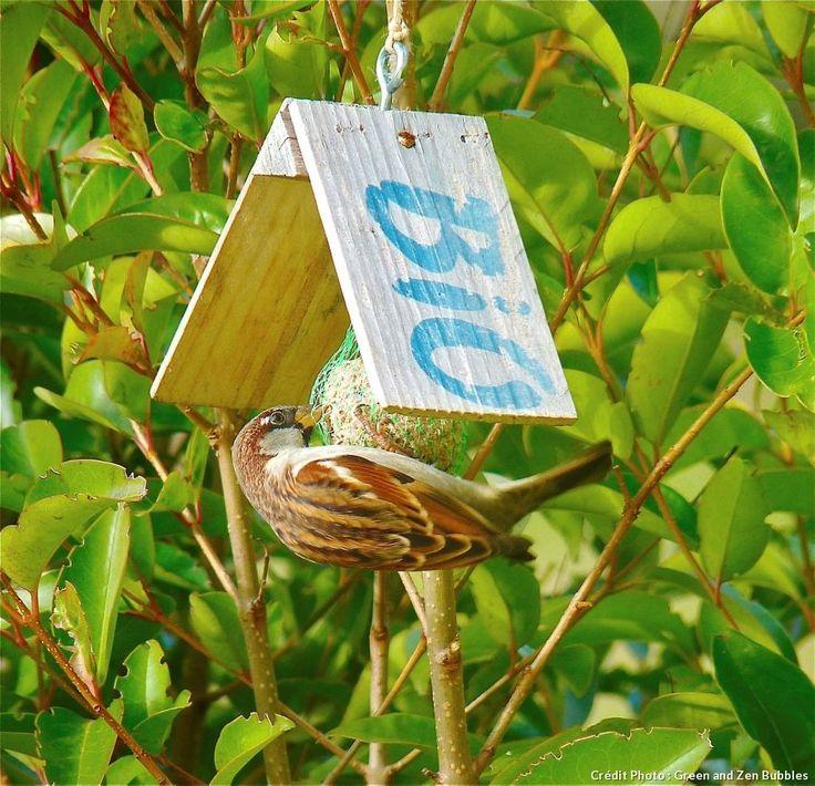 Avec des bouteilles en plastique, des briques de jus de fruit, des boîtes de conserve ou des bouts de cagettes, créez des mangeoires charmantes, colorées et bien utiles pour nourrir les oiseaux du jardin.