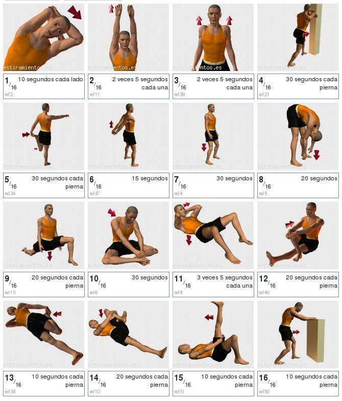 En que parte de la gimnasia se utiliza el musculo trapecio for En que se utiliza el marmol