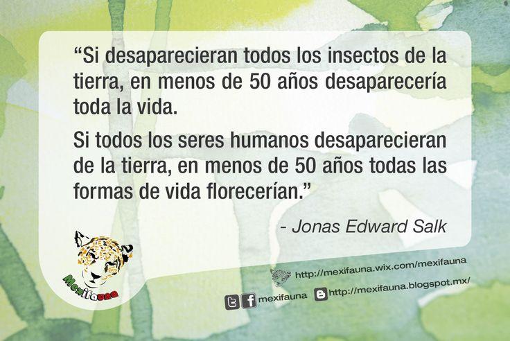 """#Ecofrase """"Si desaparecieran todos los insectos de la tierra, en menos de 50 años desaparecería toda la vida. Si todos los seres humanos desaparecieran de la tierra, en menos de 50 años todas las formas de vida florecerían"""". Jonas Edward Salk (1914-1995)"""