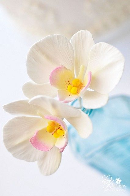 White orchid with a hint of pink